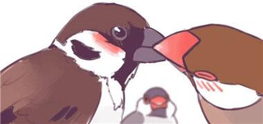 如果我是一只鸟你能接受吗